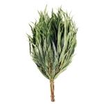 Branches pour sauna Gerbes de branches FOUET SAUNA EUCALYPTUS